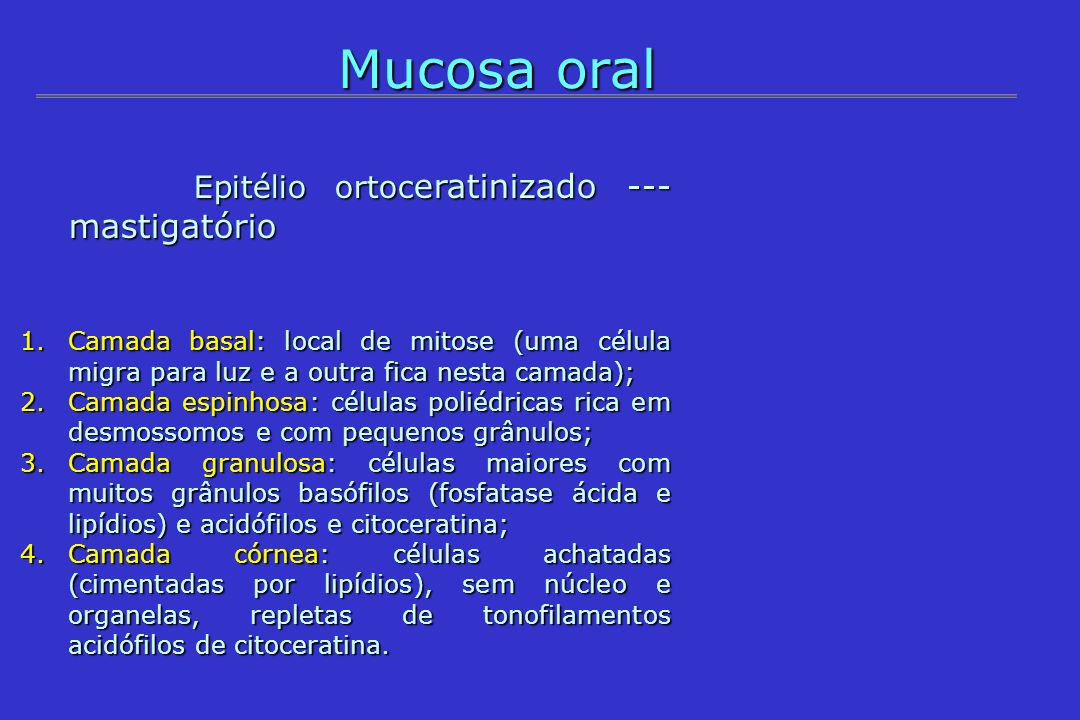 Mucosa oral Epitélio ortoceratinizado --- mastigatório