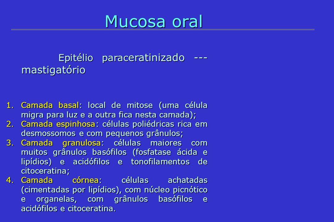 Mucosa oral Epitélio paraceratinizado --- mastigatório