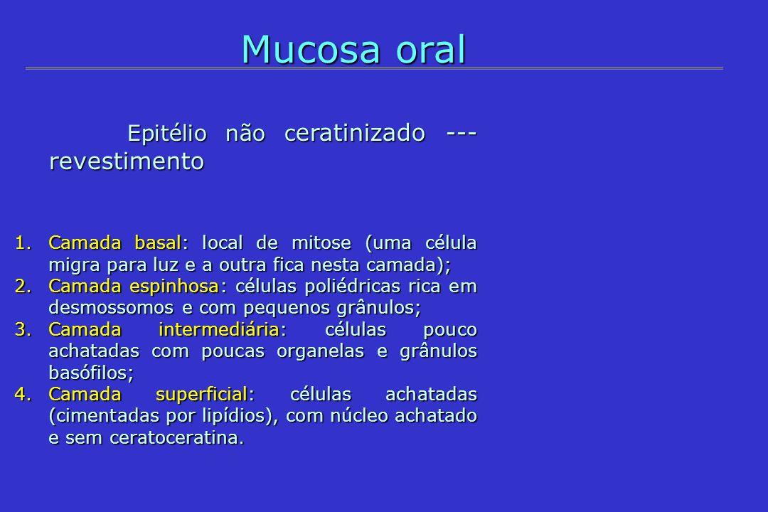 Mucosa oral Epitélio não ceratinizado --- revestimento