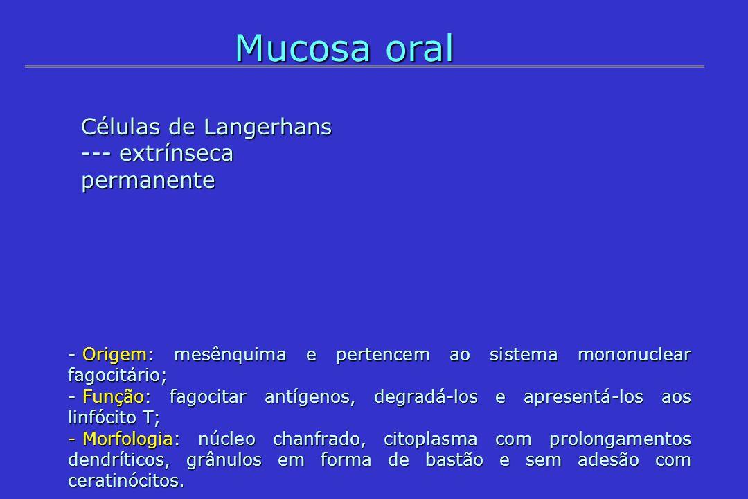 Mucosa oral Células de Langerhans --- extrínseca permanente