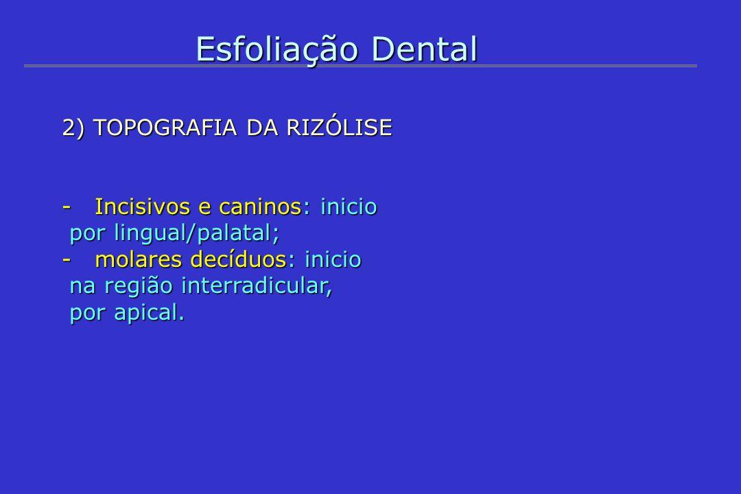 Esfoliação Dental 2) TOPOGRAFIA DA RIZÓLISE