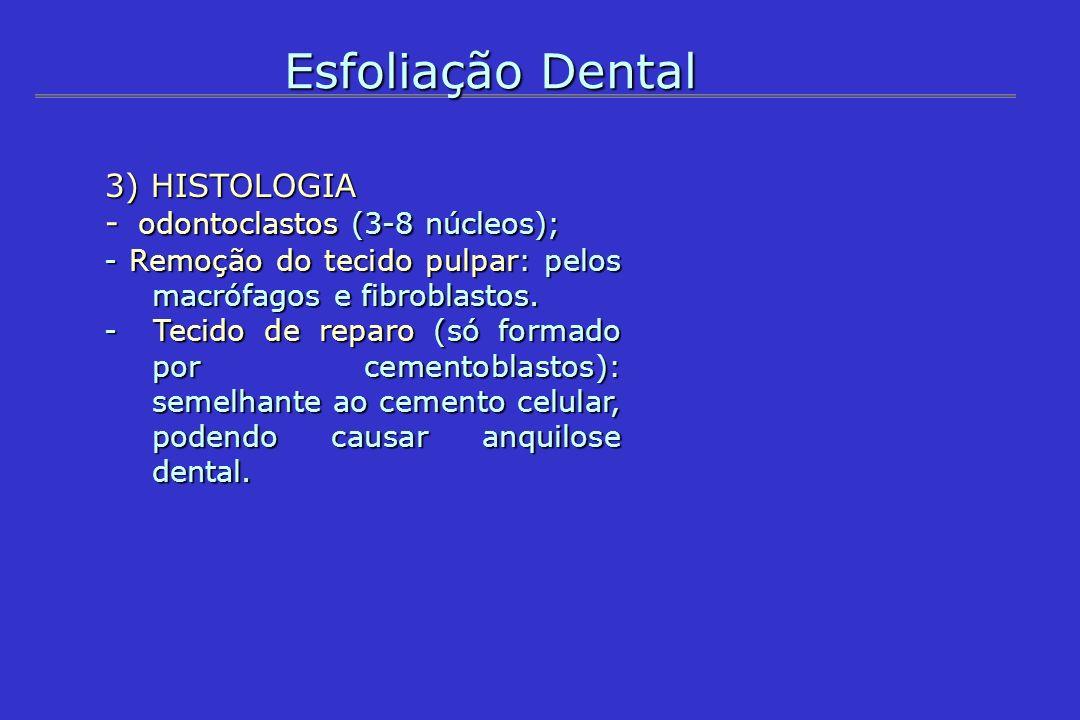 Esfoliação Dental 3) HISTOLOGIA - odontoclastos (3-8 núcleos);