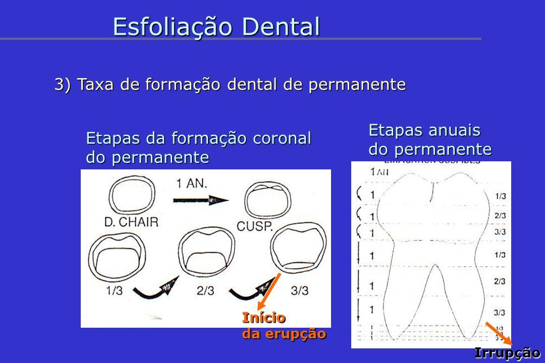 Esfoliação Dental 3) Taxa de formação dental de permanente