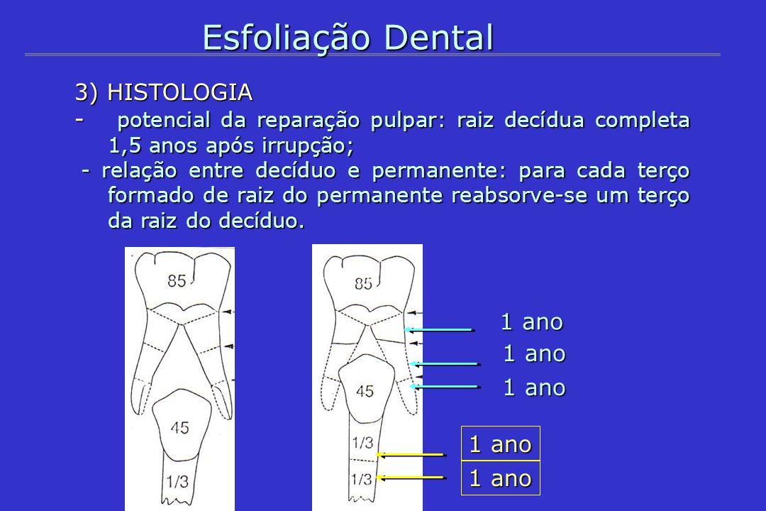 Esfoliação Dental 3) HISTOLOGIA