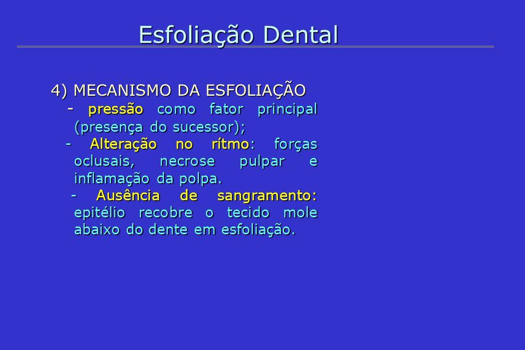 Esfoliação Dental 4) MECANISMO DA ESFOLIAÇÃO