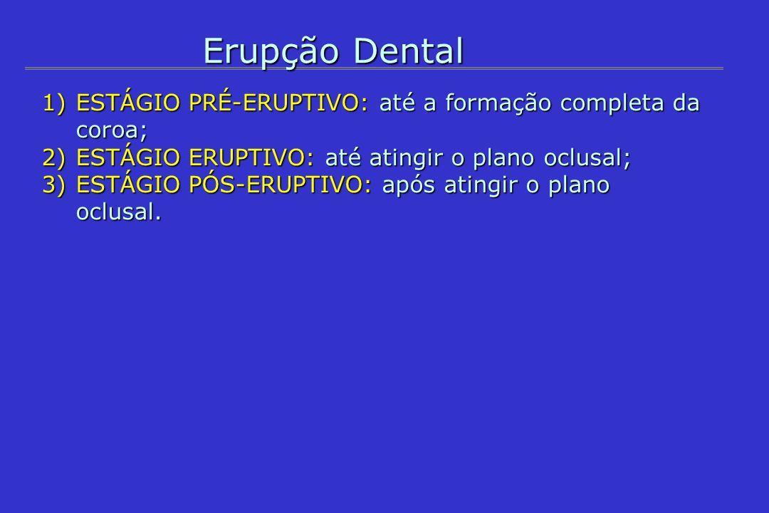 Erupção Dental ESTÁGIO PRÉ-ERUPTIVO: até a formação completa da coroa;