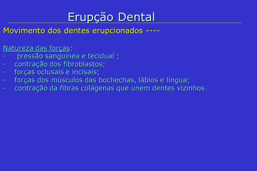 Erupção Dental Movimento dos dentes erupcionados ----