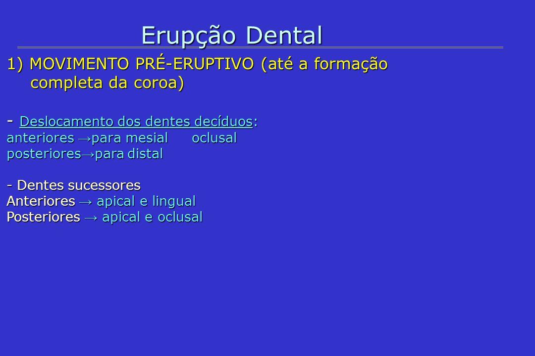 Erupção Dental1) MOVIMENTO PRÉ-ERUPTIVO (até a formação completa da coroa) - Deslocamento dos dentes decíduos: