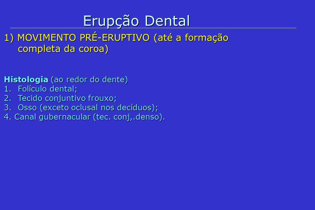 Erupção Dental1) MOVIMENTO PRÉ-ERUPTIVO (até a formação completa da coroa) Histologia (ao redor do dente)