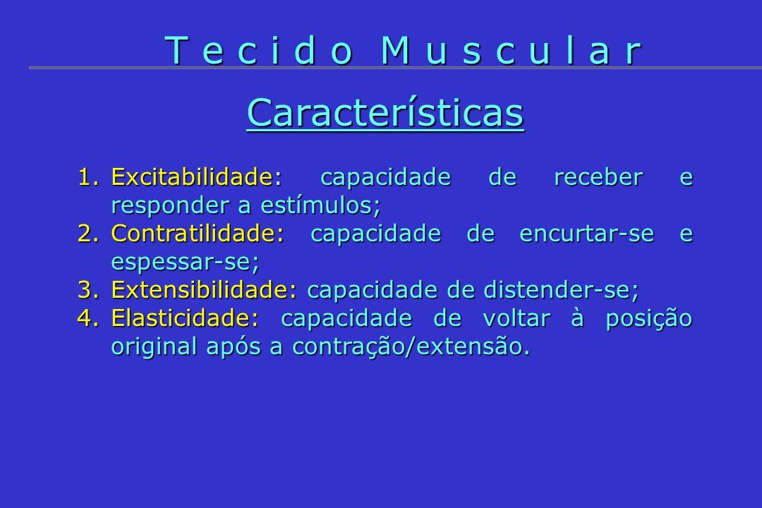T e c i d o M u s c u l a r Características
