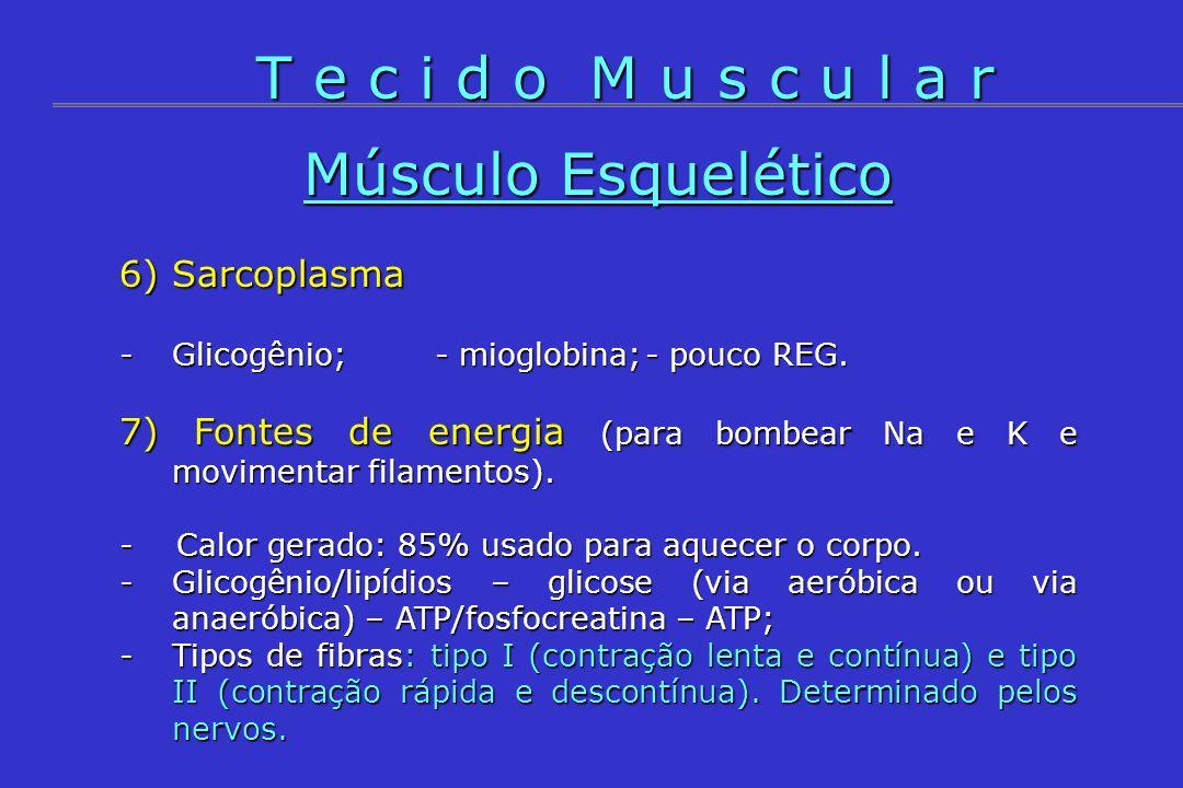 T e c i d o M u s c u l a r Músculo Esquelético 6) Sarcoplasma