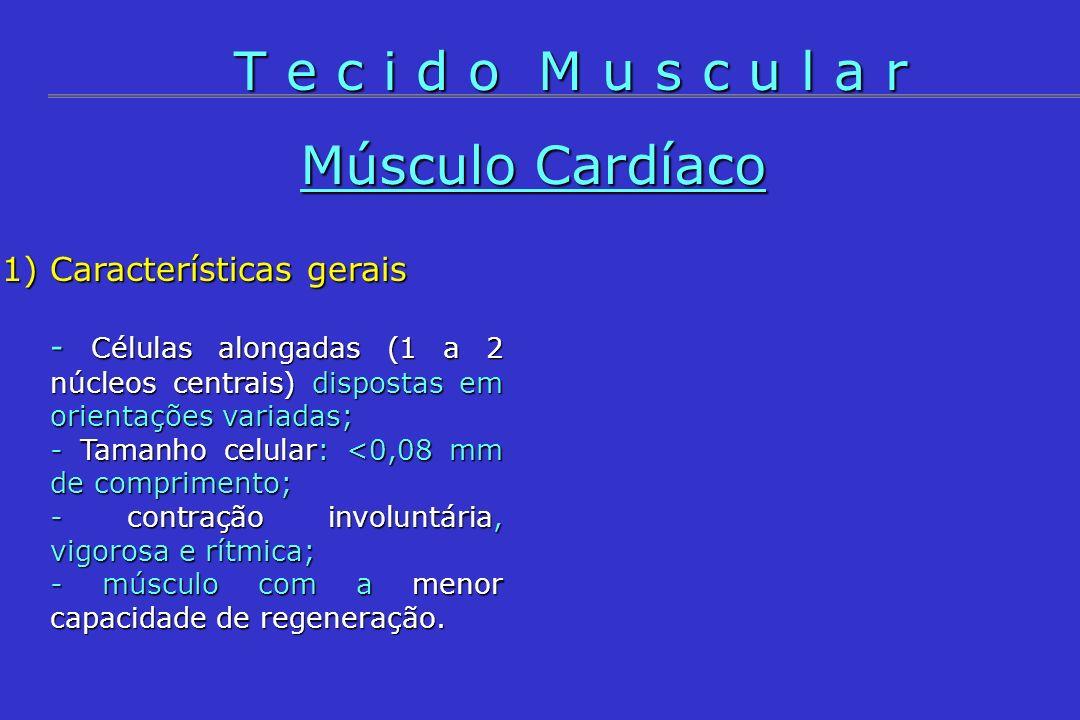 T e c i d o M u s c u l a r Músculo Cardíaco Características gerais