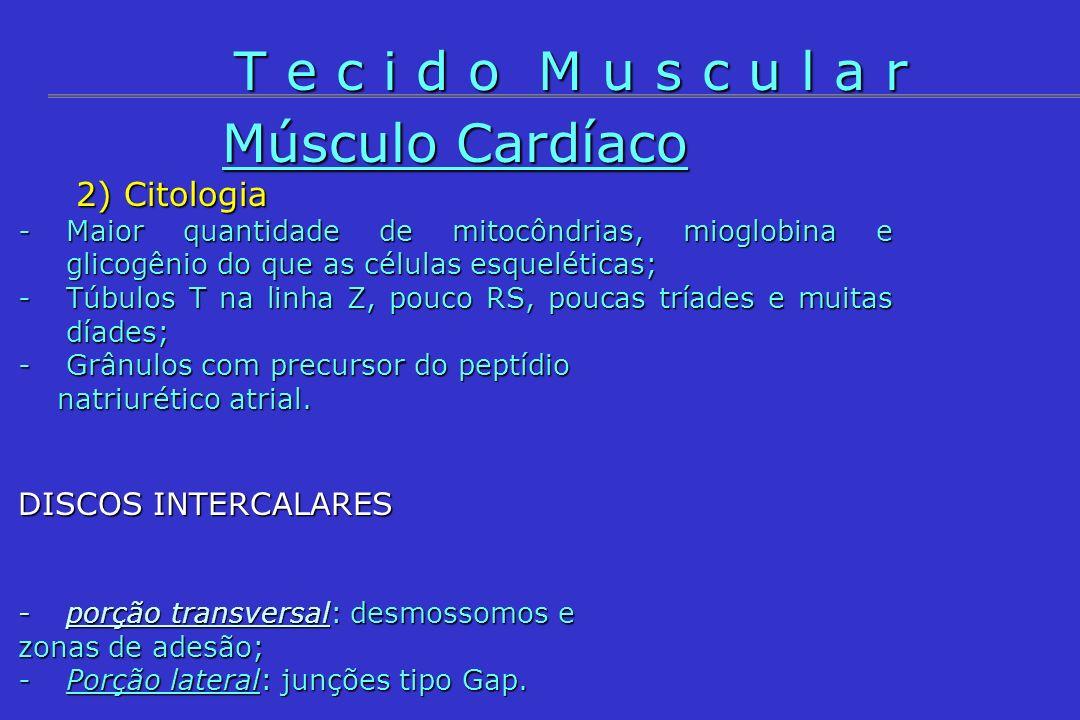 T e c i d o M u s c u l a r Músculo Cardíaco 2) Citologia