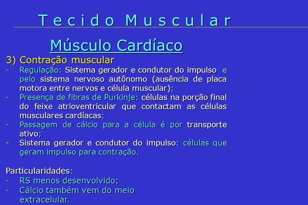 T e c i d o M u s c u l a r Músculo Cardíaco 3) Contração muscular
