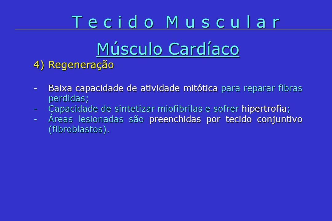T e c i d o M u s c u l a r Músculo Cardíaco 4) Regeneração