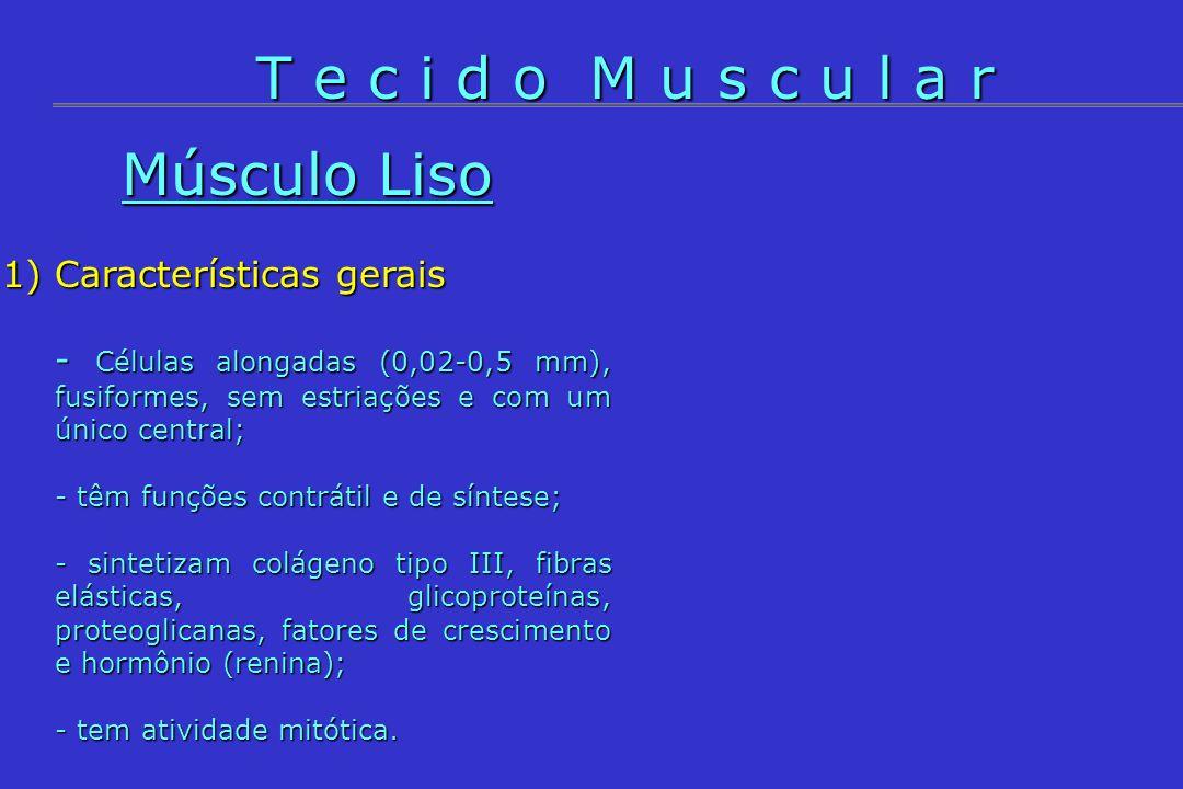 T e c i d o M u s c u l a r Músculo Liso Características gerais