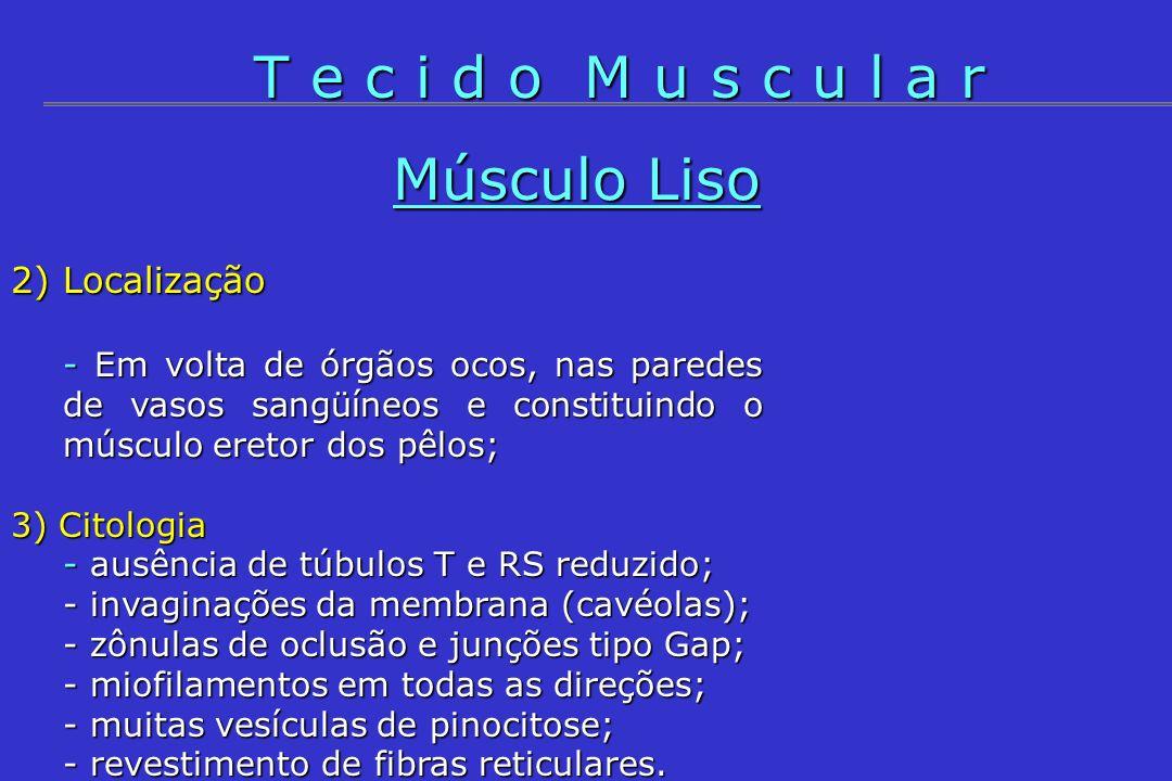 T e c i d o M u s c u l a r Músculo Liso 2) Localização