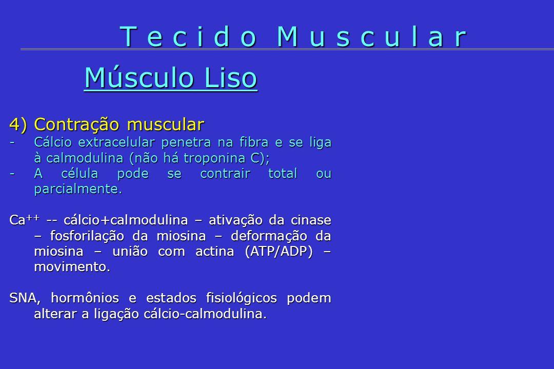 T e c i d o M u s c u l a r Músculo Liso 4) Contração muscular