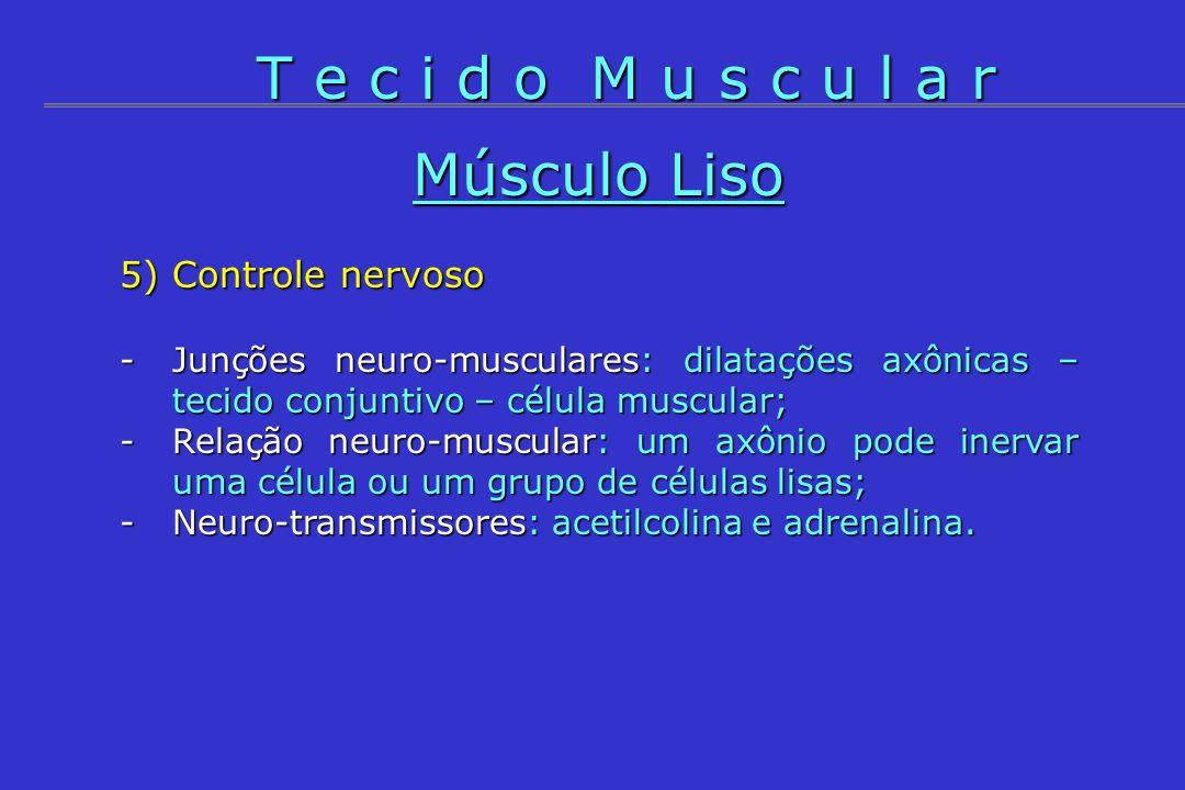 T e c i d o M u s c u l a r Músculo Liso 5) Controle nervoso