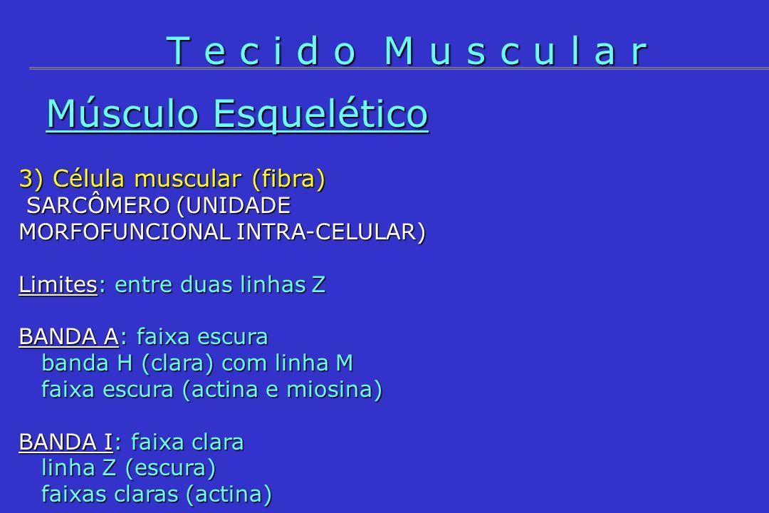 T e c i d o M u s c u l a r Músculo Esquelético