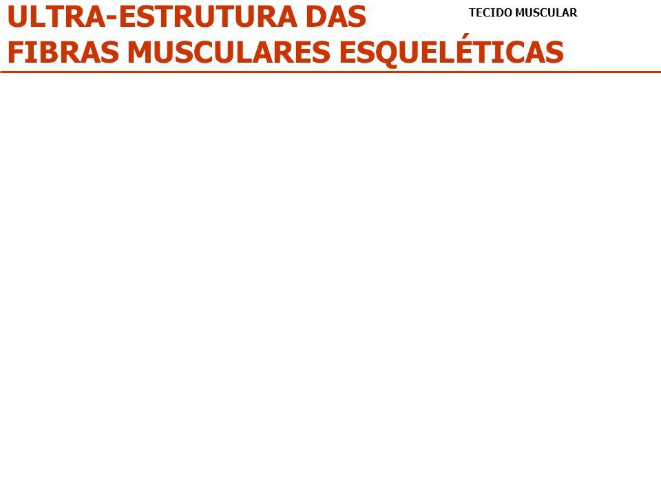 FIBRAS MUSCULARES ESQUELÉTICAS