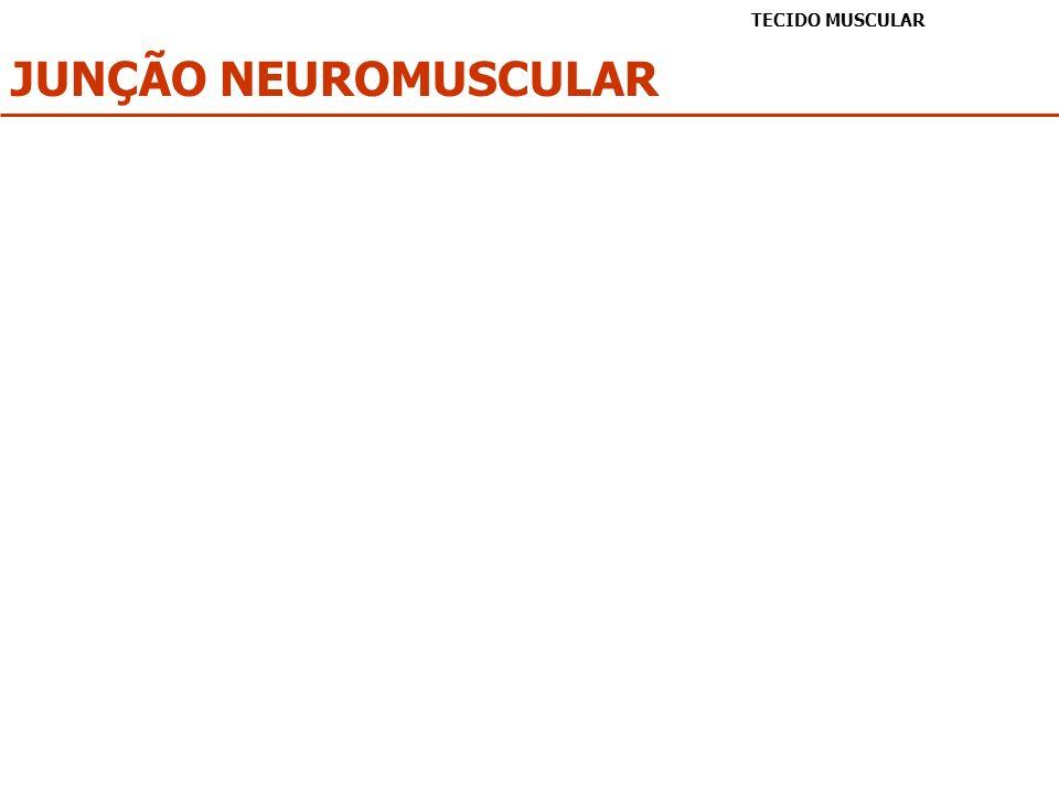 TECIDO MUSCULAR JUNÇÃO NEUROMUSCULAR