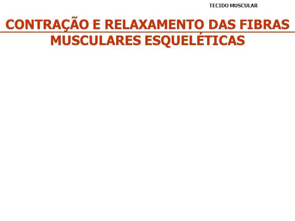 CONTRAÇÃO E RELAXAMENTO DAS FIBRAS MUSCULARES ESQUELÉTICAS