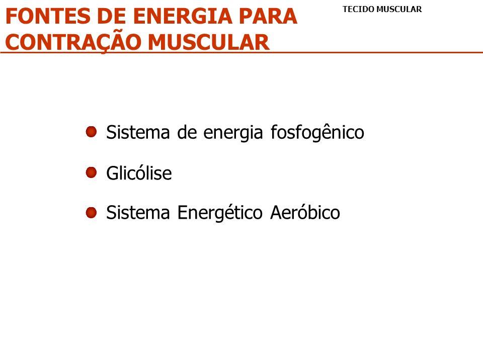 FONTES DE ENERGIA PARA CONTRAÇÃO MUSCULAR