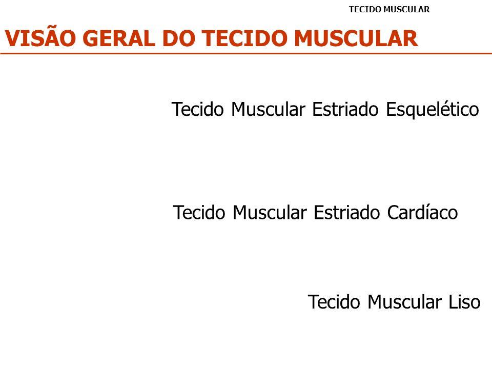 VISÃO GERAL DO TECIDO MUSCULAR