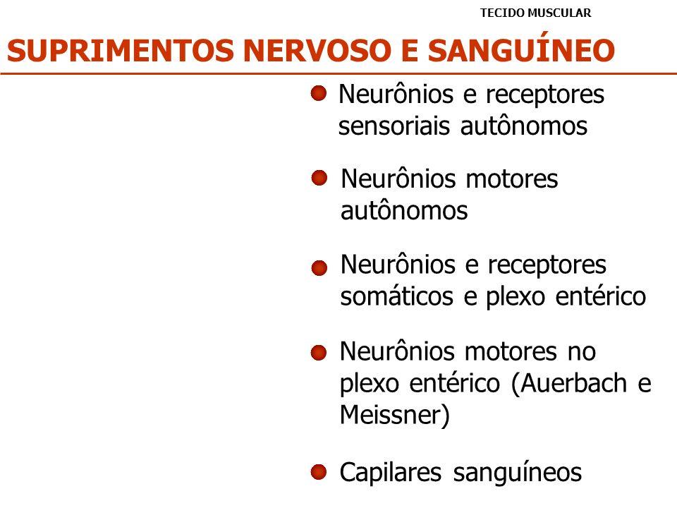 SUPRIMENTOS NERVOSO E SANGUÍNEO