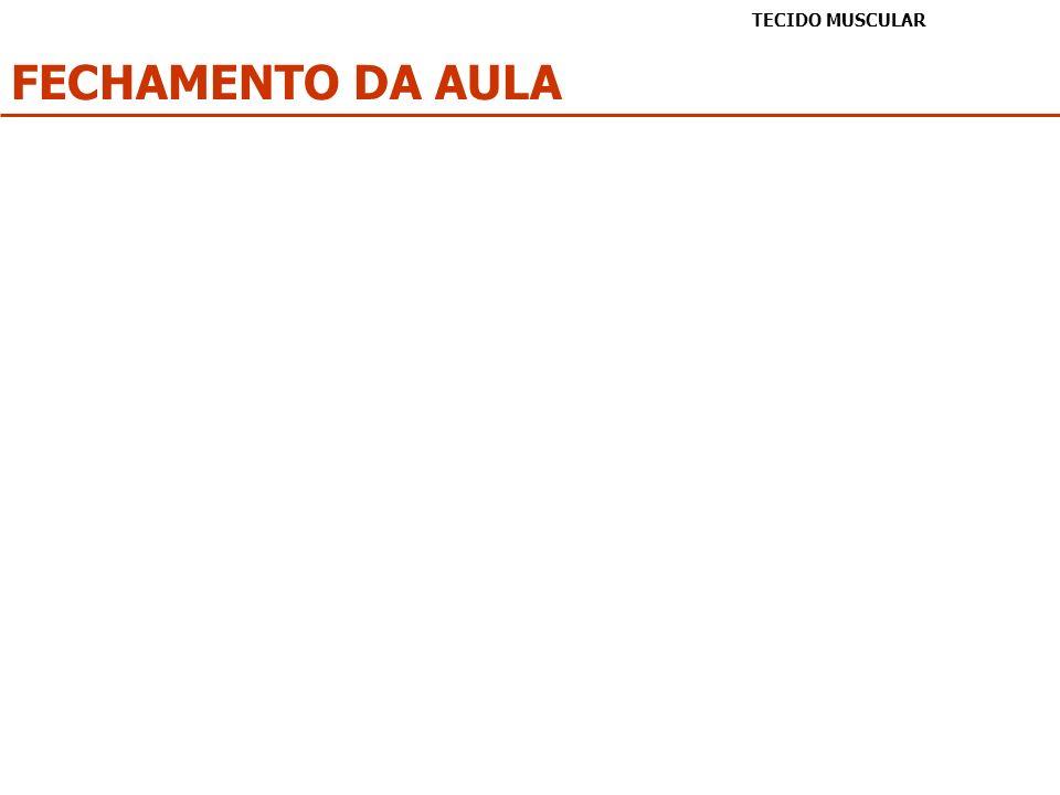 TECIDO MUSCULAR FECHAMENTO DA AULA