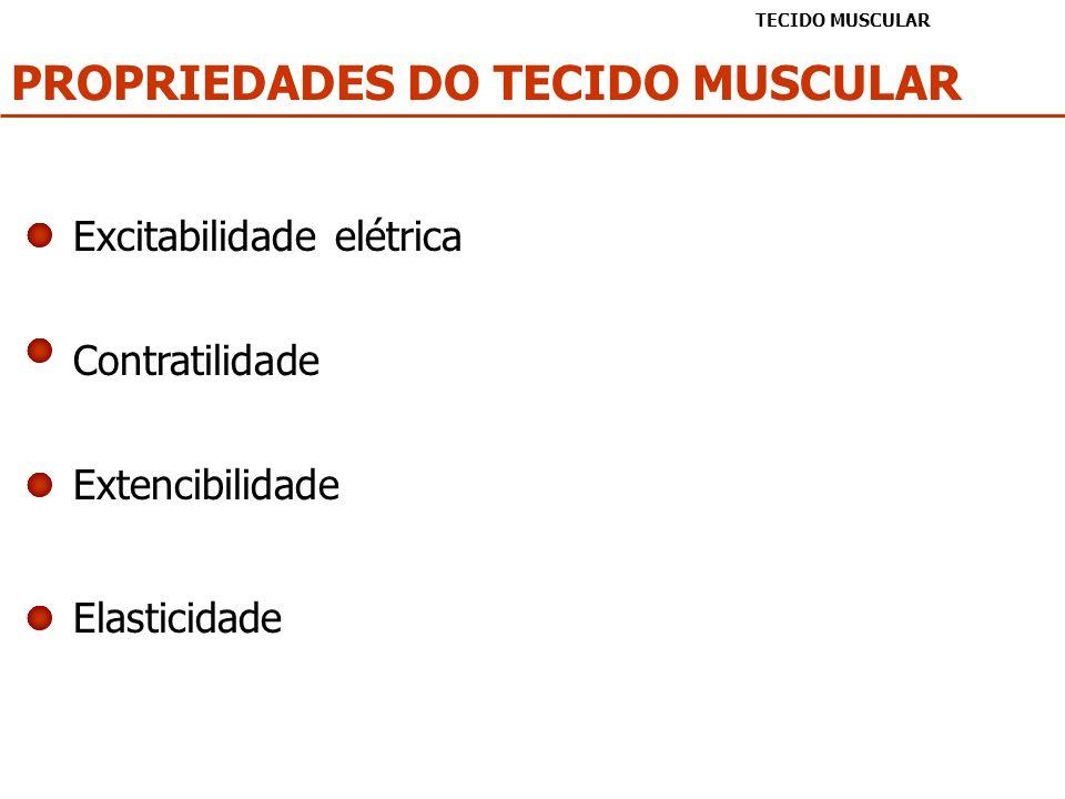PROPRIEDADES DO TECIDO MUSCULAR