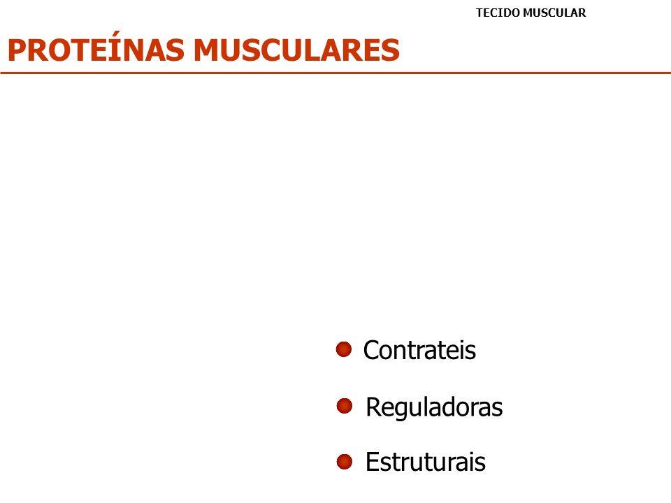 PROTEÍNAS MUSCULARES Contrateis Reguladoras Estruturais