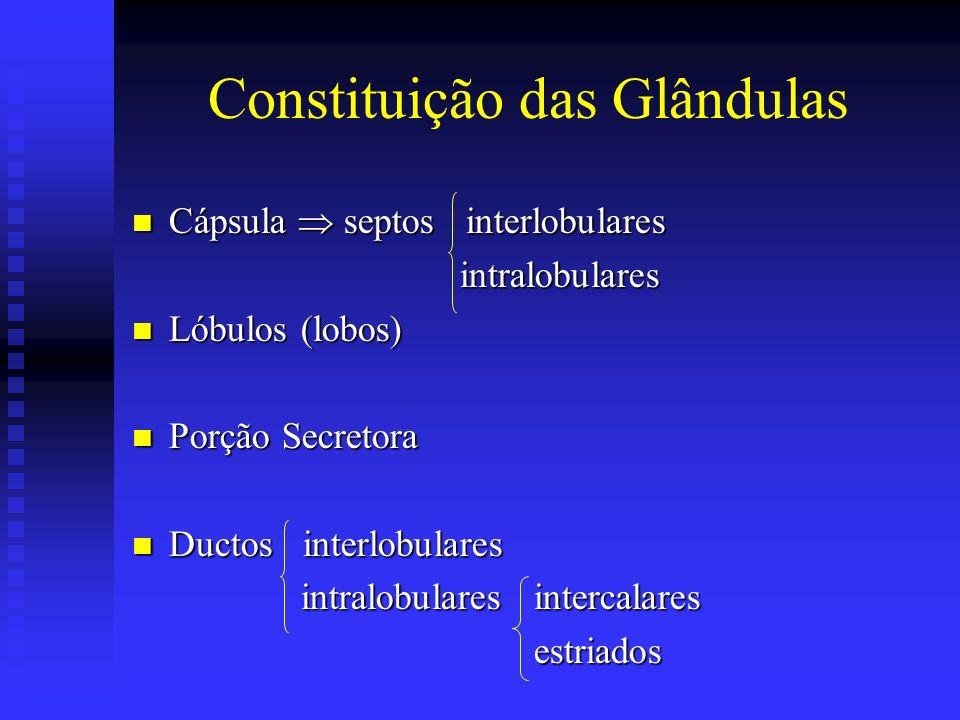 Constituição das Glândulas