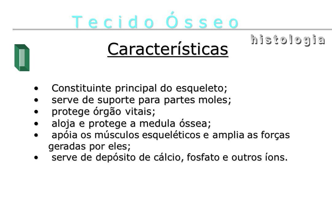 T e c i d o Ó s s e o Características histologia