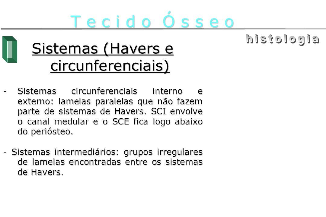 Sistemas (Havers e circunferenciais)