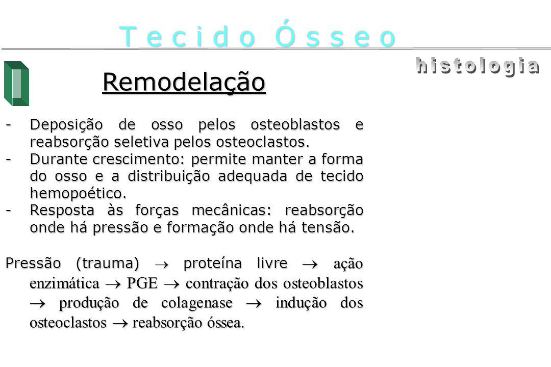 T e c i d o Ó s s e o histologia Remodelação