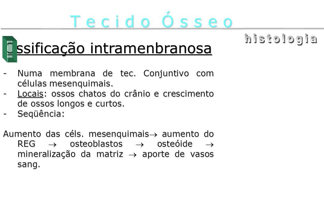 Ossificação intramenbranosa