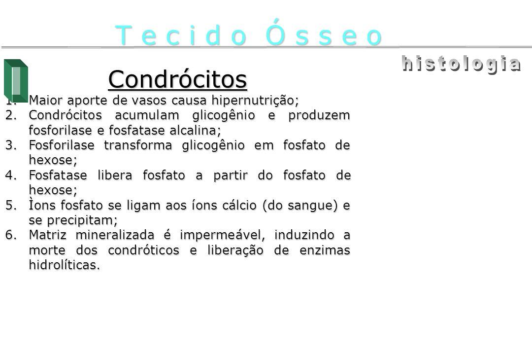 T e c i d o Ó s s e o histologia Condrócitos
