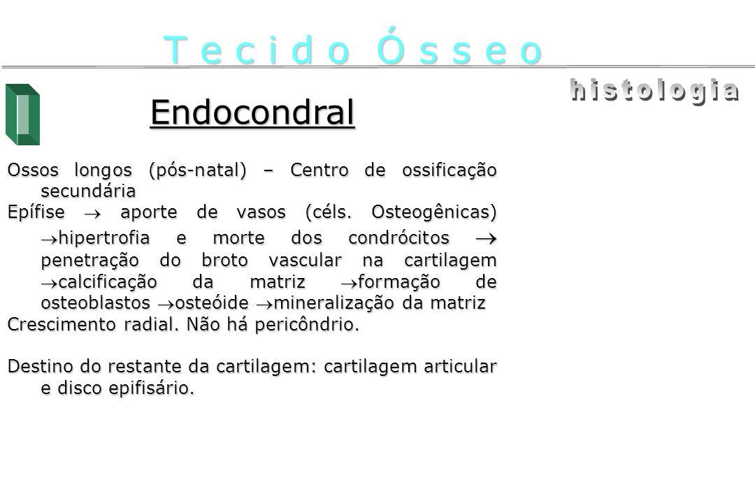 T e c i d o Ó s s e o histologia Endocondral