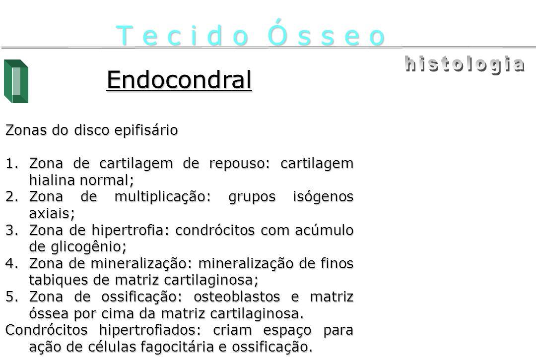 T e c i d o Ó s s e o histologia Endocondral Zonas do disco epifisário