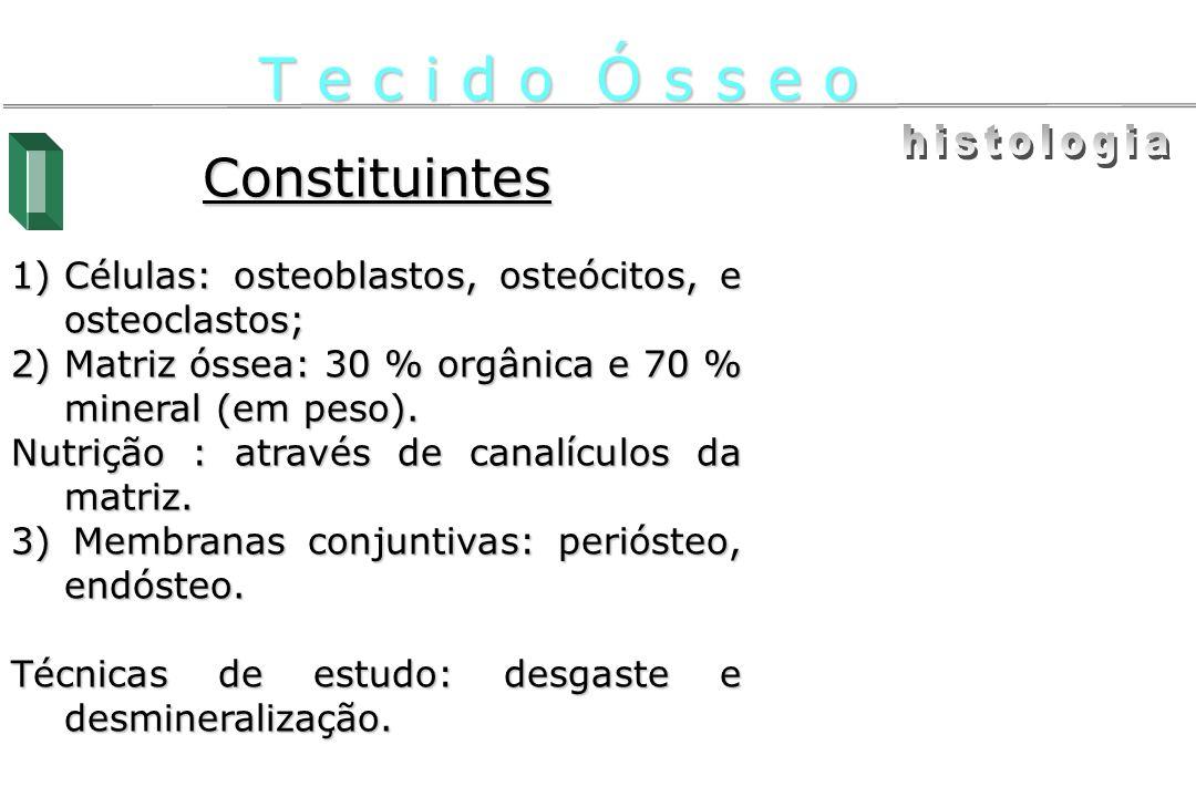 T e c i d o Ó s s e o histologia Constituintes