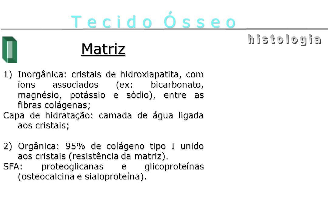 T e c i d o Ó s s e o histologia Matriz