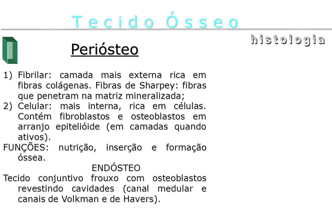 T e c i d o Ó s s e o histologia Periósteo