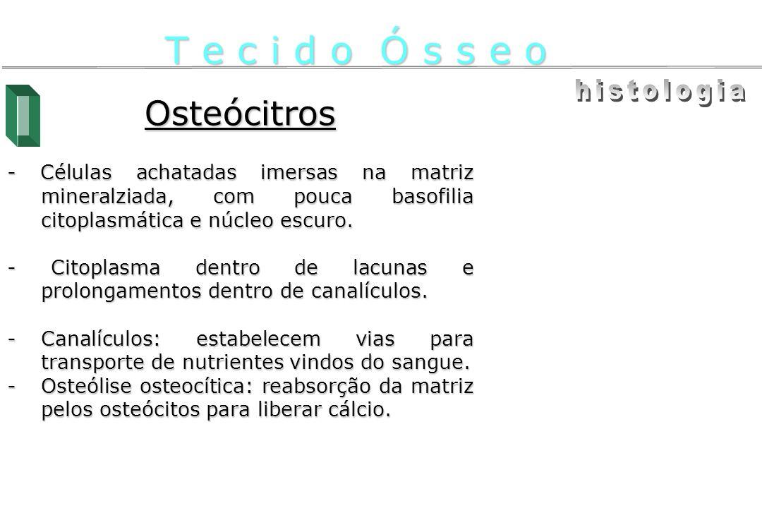 T e c i d o Ó s s e o histologia Osteócitros