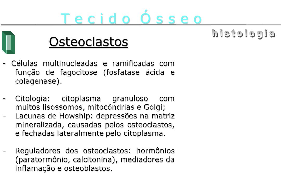T e c i d o Ó s s e o histologia Osteoclastos