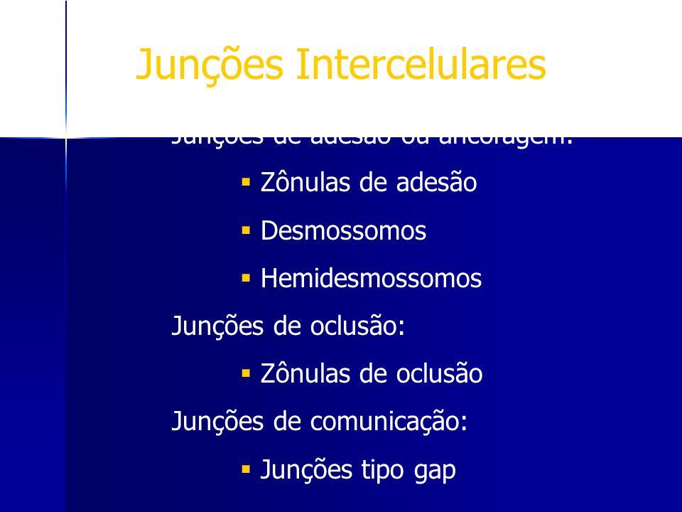 Junções Intercelulares
