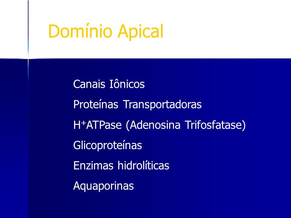 Domínio Apical Canais Iônicos Proteínas Transportadoras
