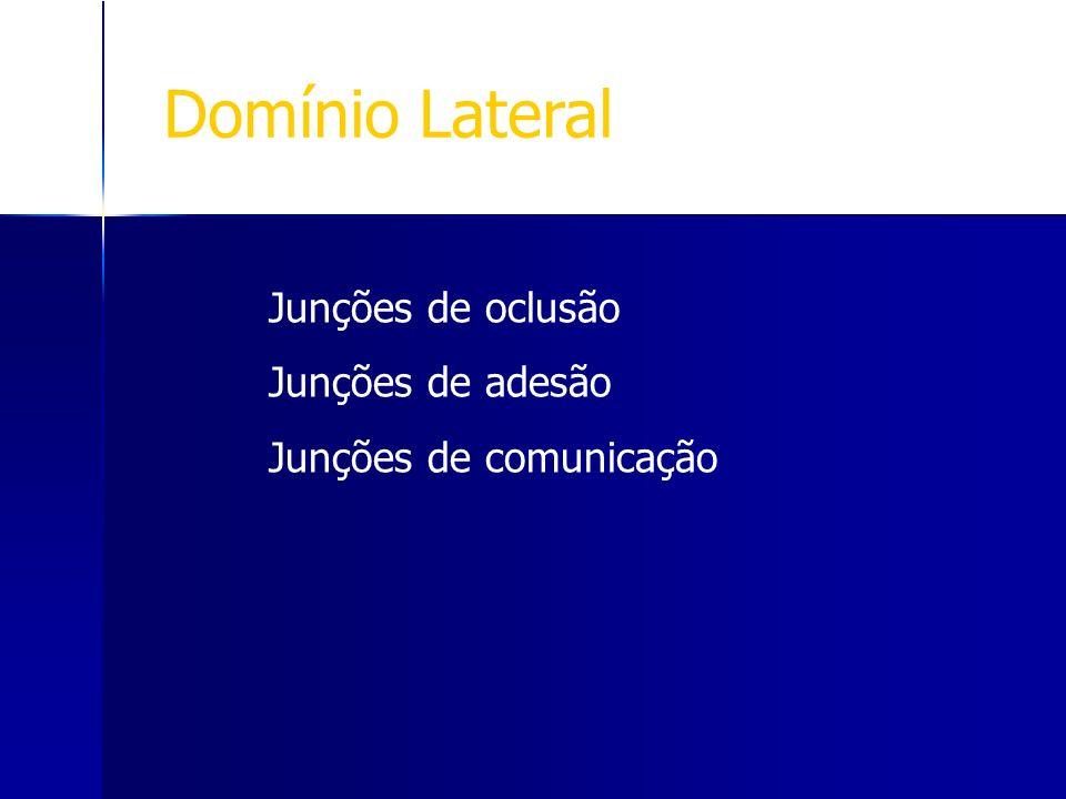 Domínio Lateral Junções de oclusão Junções de adesão