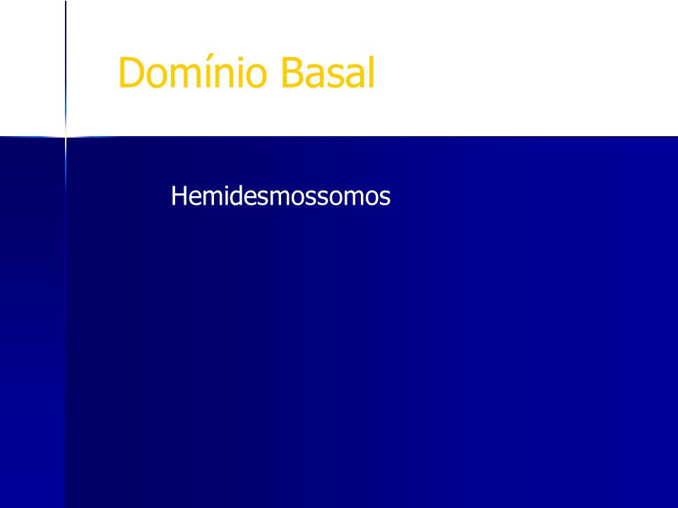Domínio Basal Hemidesmossomos